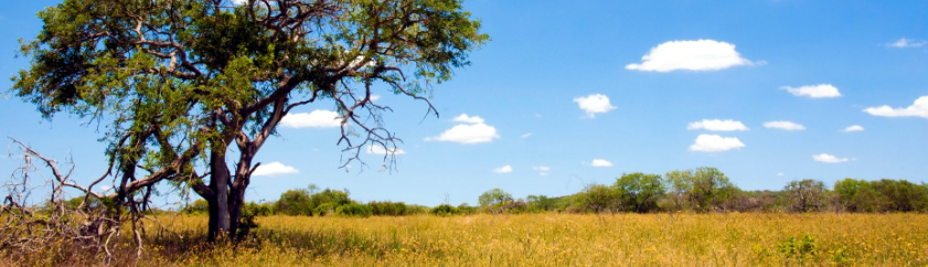 Kruger National Park Budget Family Holiday Accommodation